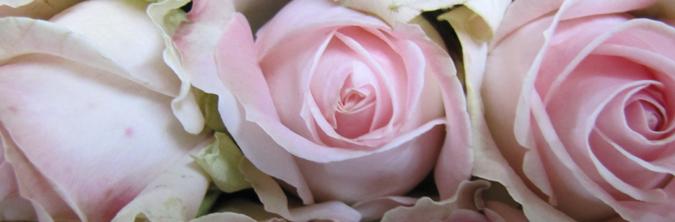 Afskårne Roser roser - her køber du både afskårne og roser til haven | gasa kolding