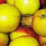 online frugt engros